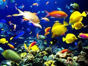 Come pesci nel grande oceano